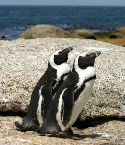 Penguin Adventures @ Peebles Library | Peebles | Ohio | United States