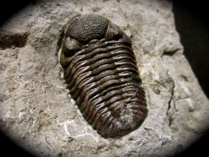 Learn About Fossils @ Peebles Library | Peebles | Ohio | United States