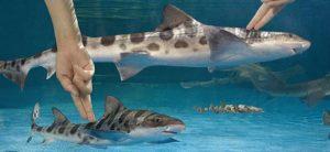 Shark Cart @ Peebles Library | Peebles | Ohio | United States