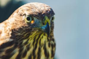Raptor Inc. Beaks and Talons @ Peebles Library